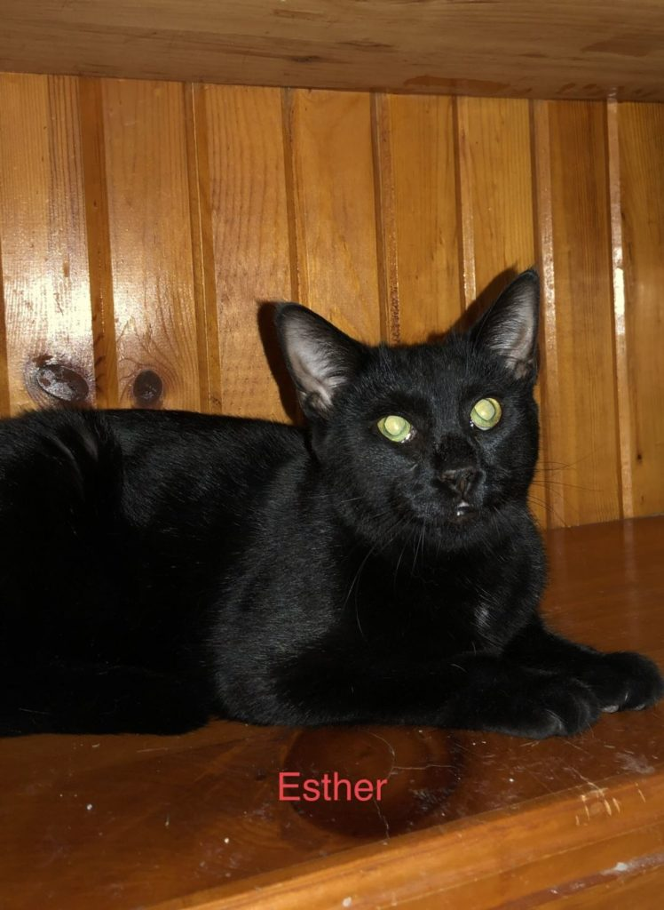 Esther the cat