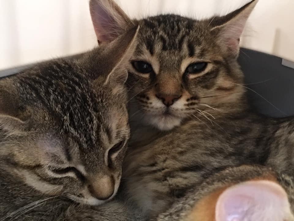 Jax & Dakota Cats