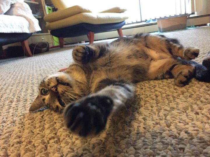 Heather the Cat